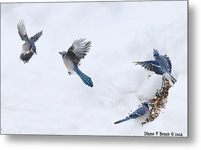 Blue Jays Forming A Line Metal Print by Diane V Bouse