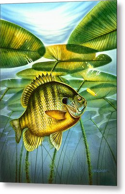 Blugill And Lilypads Metal Print