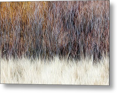 Blurred Brown Winter Woodland Background Metal Print by Elena Elisseeva