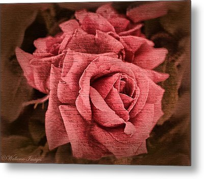 Metal Print featuring the photograph Blush by Wallaroo Images