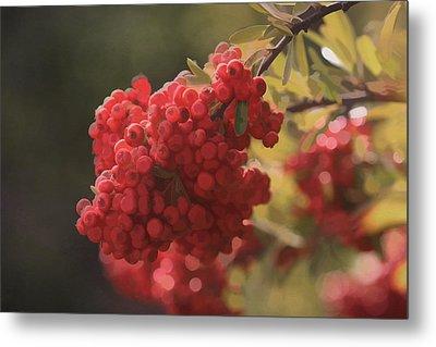 Blushing Berries Metal Print by Kandy Hurley