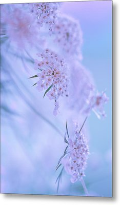 Metal Print featuring the photograph Blushing Bride by Annette Hugen