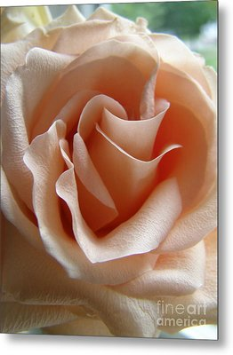 Metal Print featuring the photograph Blushing Rose by Margie Amberge