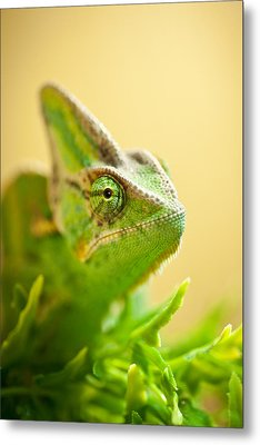 Bob The Chameleon  Metal Print