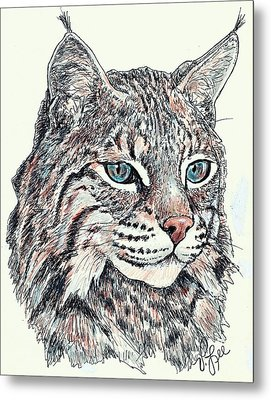 Metal Print featuring the drawing Bobcat Portrait by VLee Watson