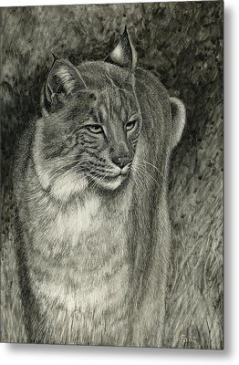 Bobcat Emerging Metal Print