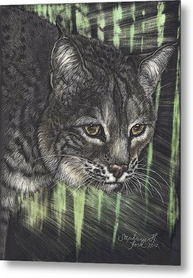 Bobcat Watching Metal Print by Stephanie Ford