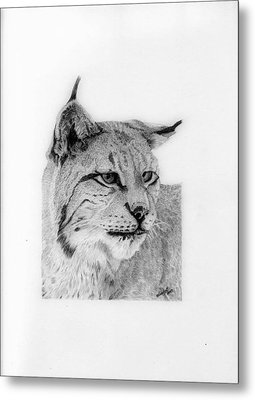 Bobcat Metal Print by Wendy Brunell
