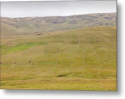 Boggy Moorland Above Wet Sleddale Metal Print