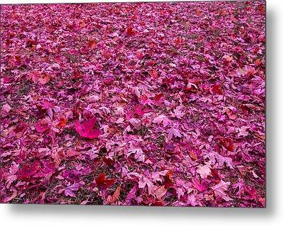 Pink Leaves Metal Print by Abdullah Alnassrallah