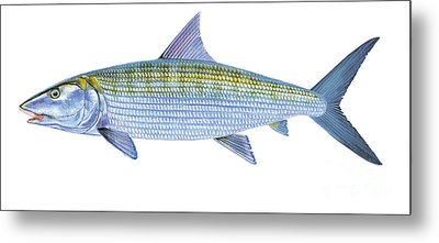 Bonefish Metal Print by Carey Chen