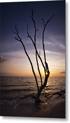 Metal Print featuring the photograph Bonita Beach Tree by Bradley R Youngberg