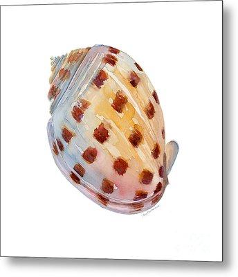 Bonnet Shell Metal Print by Amy Kirkpatrick