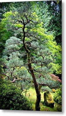 Bonsai Tree Metal Print by Athena Mckinzie