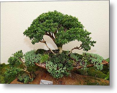 Bonsai Treet - Us Botanic Garden - 01131 Metal Print