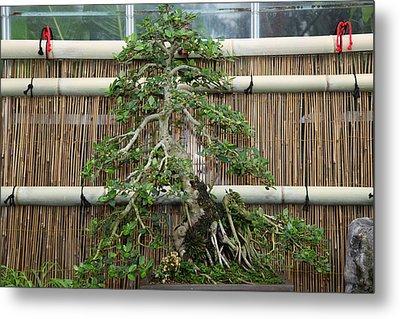 Bonsai Treet - Us Botanic Garden - 01135 Metal Print