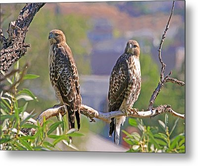 Bookends Metal Print by Donna Kennedy