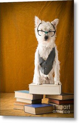 Bookish Dog Metal Print by Edward Fielding