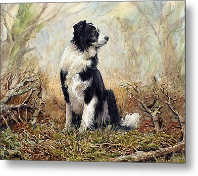 Border Collie Metal Print by Anthony Forster