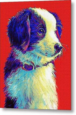 Border Collie Puppy Metal Print by Jane Schnetlage