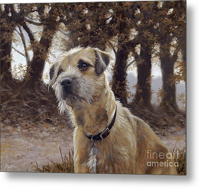 Border Terrier In The Woods Metal Print by John Silver
