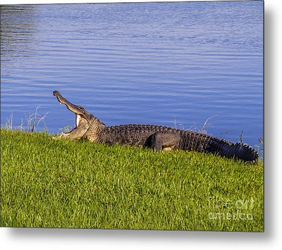 Bored And Hungry Metal Print by Zina Stromberg