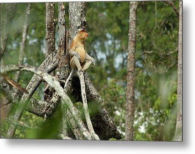 Borneo, Brunei Mangrove Forest Metal Print by Cindy Miller Hopkins