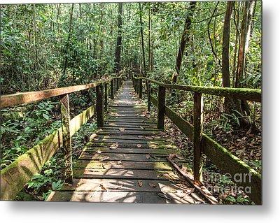 Borneo Jungle Metal Print