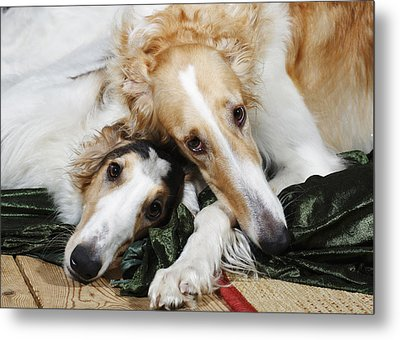 Borzoi Dogs In Love Metal Print by Christian Lagereek