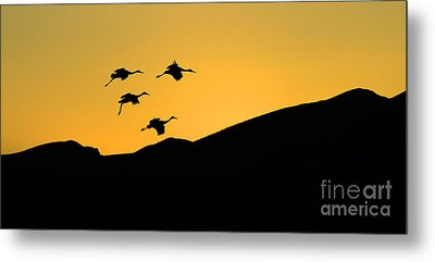 Bosque Del Apache Last Light Metal Print by Bob Christopher