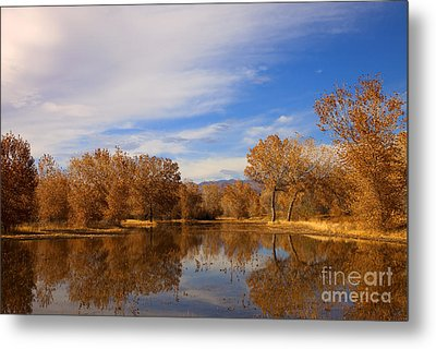 Bosque Del Apache Reflections Metal Print by Mike  Dawson