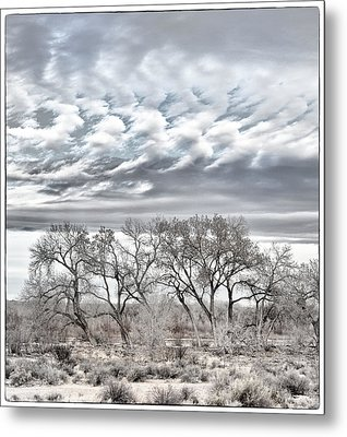 Bosque Pale Metal Print