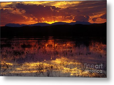 Bosque Sunset - Orange Metal Print by Steven Ralser