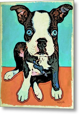 Boston Terrier - Blue Metal Print