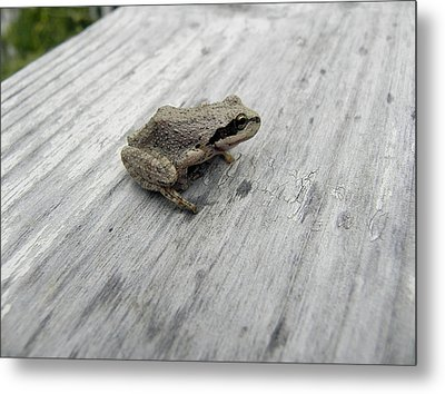 Metal Print featuring the photograph Botanical Gardens Tree Frog by Cheryl Hoyle