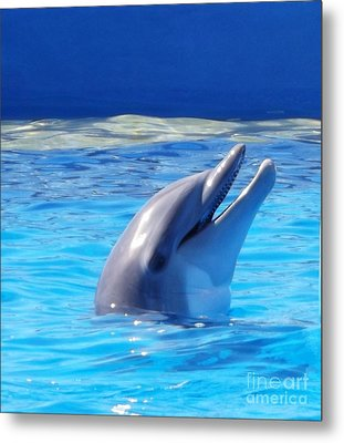 Bottle Nose Dolphin Metal Print