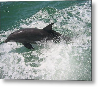 Metal Print featuring the photograph Bottlenose Dolphin Catching A Wave by Jean Marie Maggi