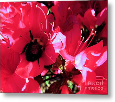 Metal Print featuring the photograph Bottoms Up by Robyn King