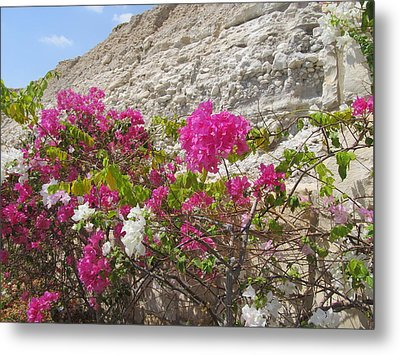 Bougainvillea At The Dead Sea Metal Print by Esther Newman-Cohen