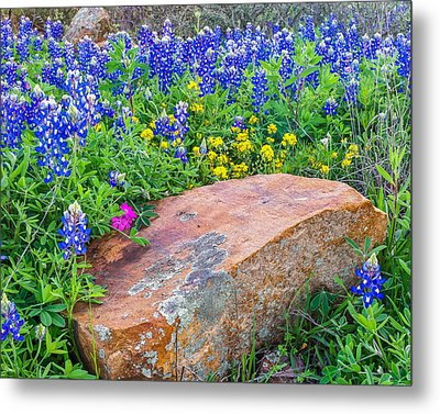 Boulder And Bluebonnets Metal Print