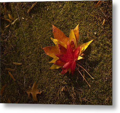 Metal Print featuring the photograph Bouquet Of Leaves by Jose Oquendo