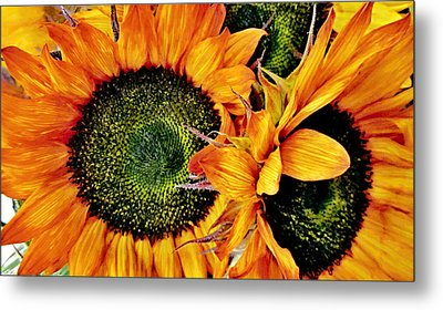 Bouquet Of Sunflowers Metal Print by Danielle  Parent