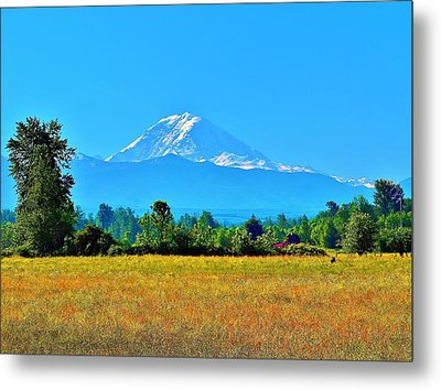 Bovine View Of Mt. Rainier Metal Print