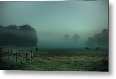 Bovines In The Mist Metal Print by Chris Fletcher