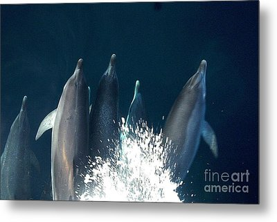 Bow Riders Metal Print by Donnie Freeman