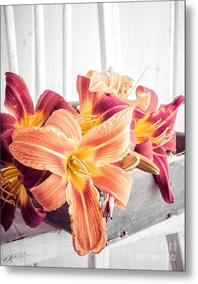 Box Of Day-lily  Metal Print by Edward Fielding