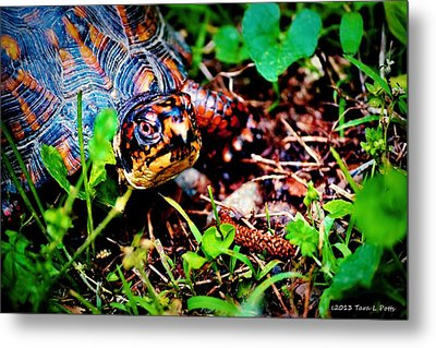 Box Turtle Metal Print by Tara Potts