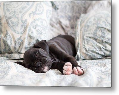 Boxer Puppy Sleeping Metal Print