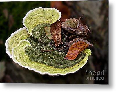 Bracket Fungi  Metal Print