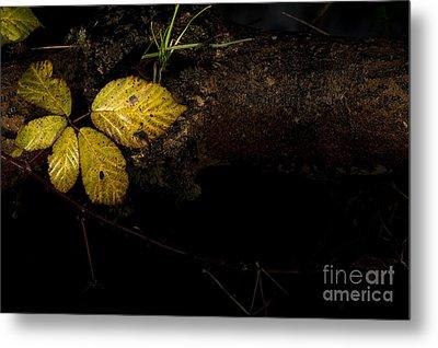 Bramble Tree Metal Print by Anne Gilbert